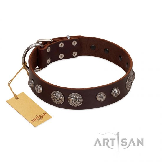 """Choco Brownie"" FDT Artisan Brown Leather Pitbull Collar Adorned with Silver-Like Conchos"