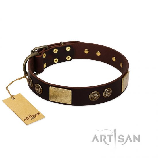 """Bow-Wow Effect"" FDT Artisan Brown Leather Pitbull Collar with Plates and Ornate Studs"