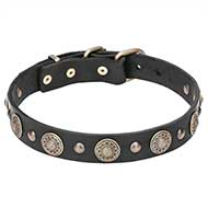 """Magic Necklace"" Pit Bull Dog Collar Decorated with Brass Round Plates - 1 1/5 inch (30 mm) wide"
