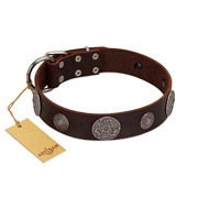 """Flashy Woof"" FDT Artisan Brown Leather Pitbull Collar with Chrome Plated Brooches"