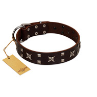 """Bigwig Woof"" FDT Artisan Brown Leather Pitbull Collar with Chrome Plated Stars and Square Studs"