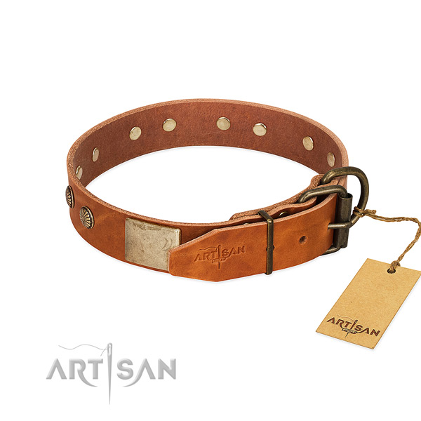 Corrosion proof hardware on everyday walking dog collar