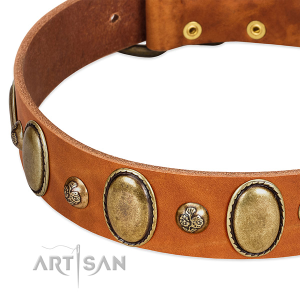 Full grain genuine leather dog collar with remarkable adornments