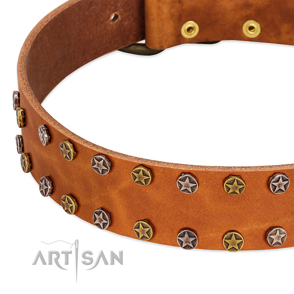 Handy use full grain leather dog collar with exceptional studs