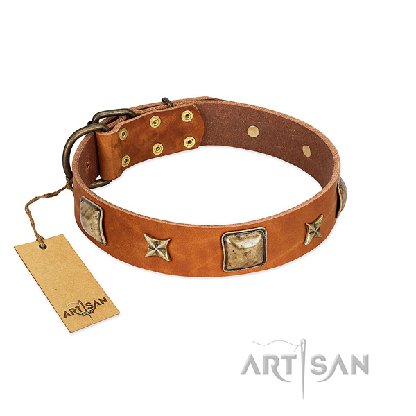 Exceptional leather collar for your four-legged friend