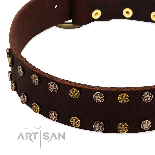 Daily use leather dog collar with top notch adornments