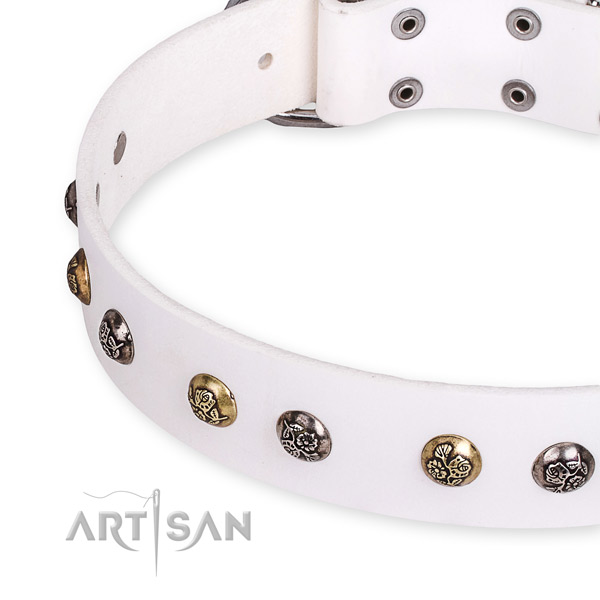 Full grain natural leather dog collar with awesome reliable studs