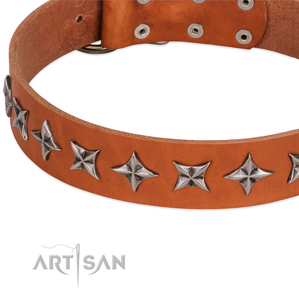 Comfortable wearing studded dog collar of quality leather