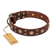 """Caprice of Fashion"" FDT Artisan Brown Leather Pitbull Collar with Round Decorations"