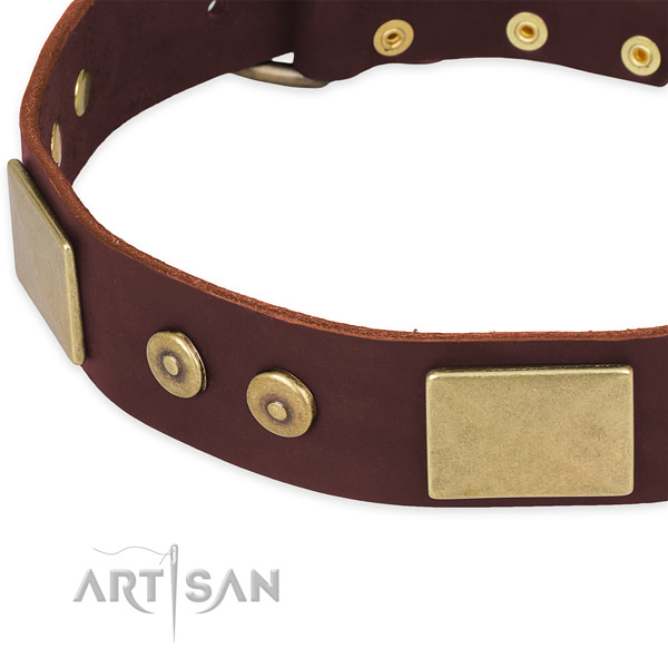 Natural genuine leather dog collar with adornments for everyday walking