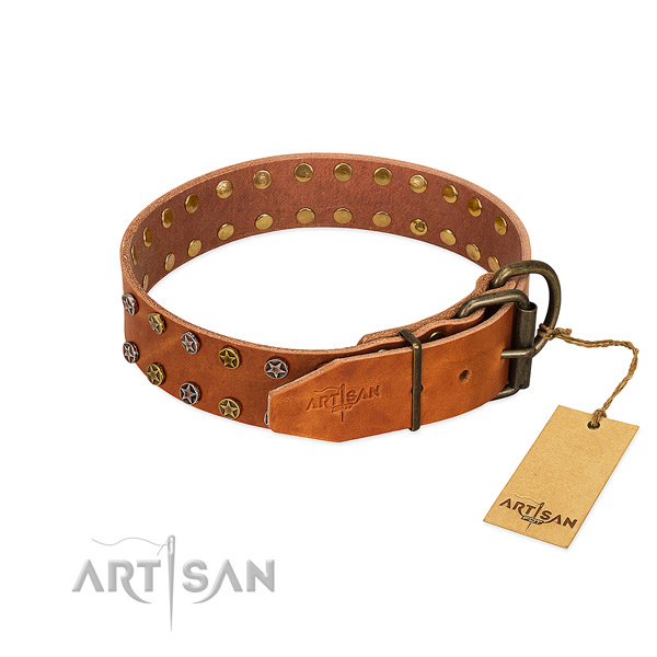 Fancy walking full grain natural leather dog collar with exceptional studs
