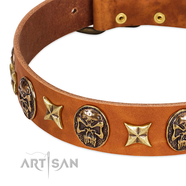 Rust-proof studs on leather dog collar for your doggie