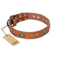 """Stunning Dress"" FDT Artisan Tan Leather Pitbull Collar with Old Bronze Look Plates and Studs"