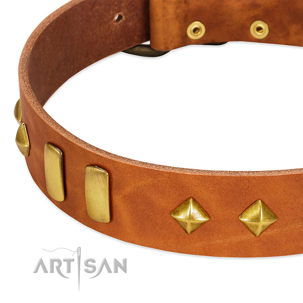 Everyday use full grain natural leather dog collar with designer adornments