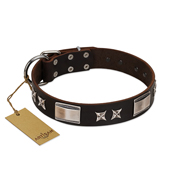"""Satin Beauts"" FDT Artisan Brown Leather Pitbull Collar with Stars and Plates"