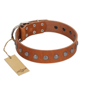 """Little Floret"" Fashionable FDT Artisan Tan Leather Pitbull Collar with Silver-Like Adornments"