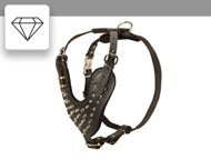 Studded / Spiked Harness