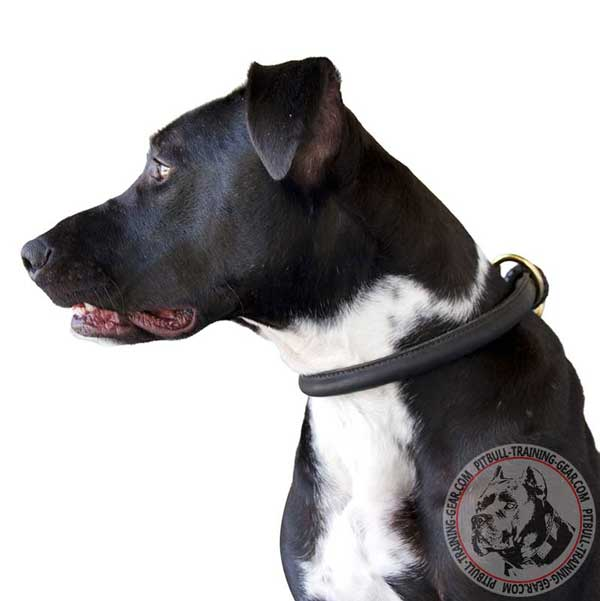 Round Leather Dog Choke Collar for American Pit Bull Terrier Behavior Correction
