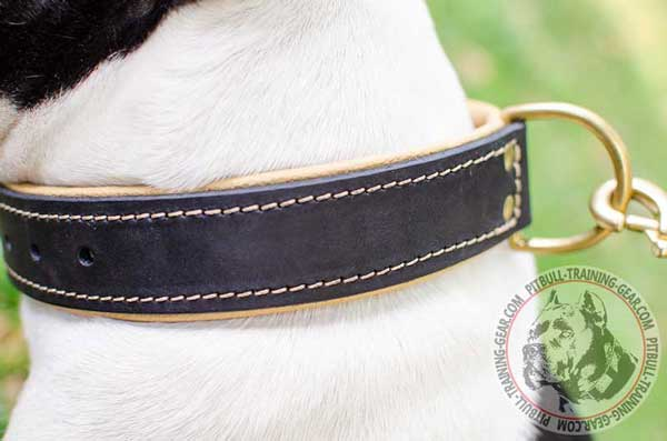 Leather Nappa Padded American Pit Bull Terrier Collar for Effective Training