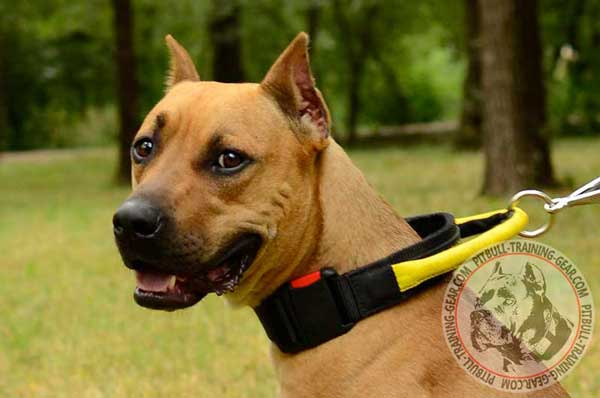 Nylon American Pit Bull Terrier Collar with Handle Allows to Collar your Dog Fast