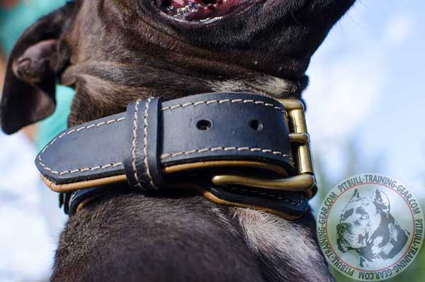 Goldish Brass Buckle for Easy Adjustment of the Dog Collar