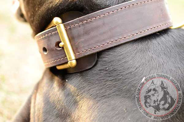 Gold-Like Brass Buckle for Proper Adjustment of Leather Dog Collar