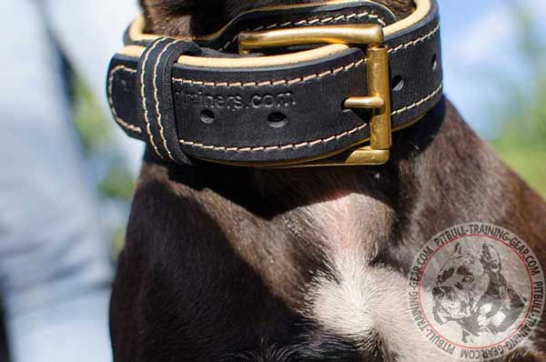Corrosion Resistant Durable Brass Buckle on Leather Pit Bull Collar