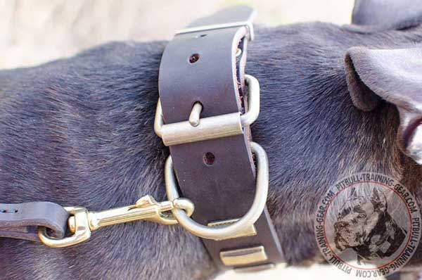 Durable Brass Buckle on Decorated Leather Dog Collar