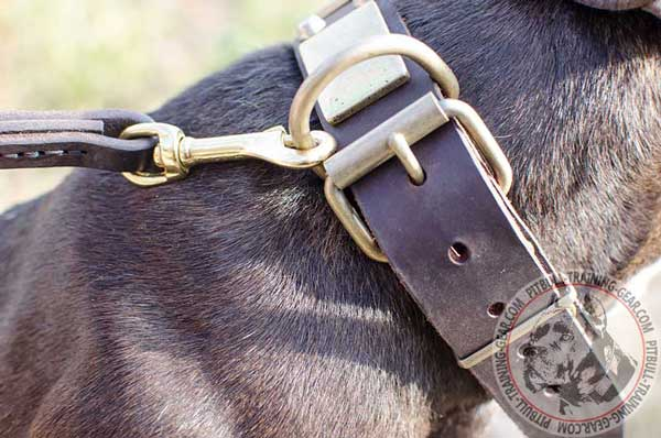 Brass Hardware for Easy Handling your Pet and Dog Lead Attachment