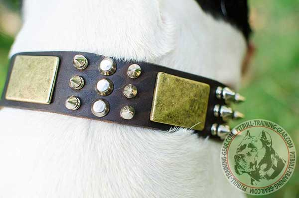 Nickel and Brass Decorations on Leather Dog Collar for Pitbull Breed