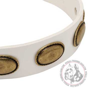 Exclusive Oval Brass Plates on White Leather Dog Collar
