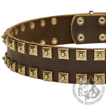 Vintage Brass Studs on Leather Pit Bull Collar for Walking