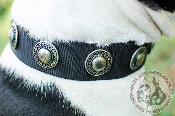 Silver Conchos on Adjustable Designer Nylon American Pit Bull Terrier Collar