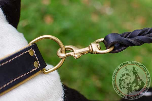 Gold-Like D-ring on Leather Collar for Pitbull for Quick Leash Attachment