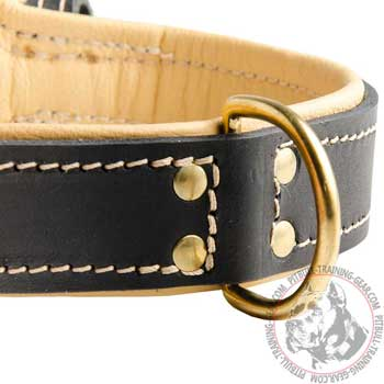 Brass D-ring on Leather Walking Pitbull Collar