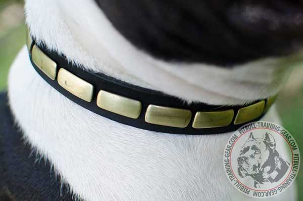 Light-Weight Leather Dog Collar for Dog with Stylish Plates