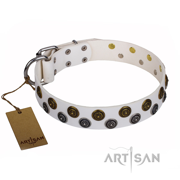Significant full grain natural leather dog collar for walking