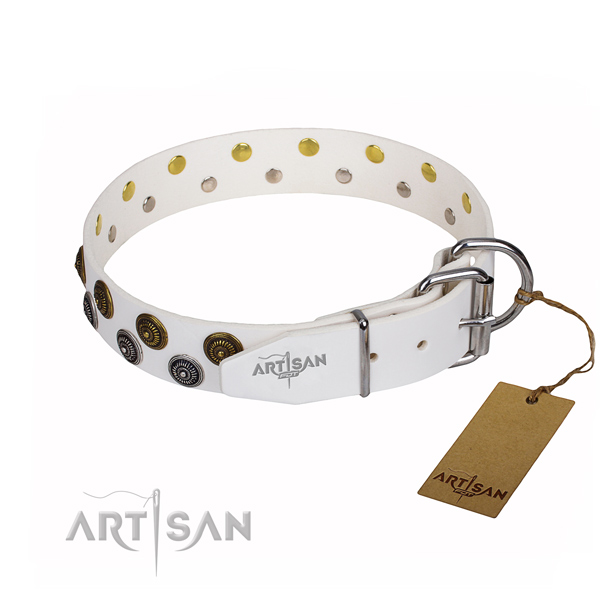 Everyday walking full grain genuine leather collar with studs for your four-legged friend
