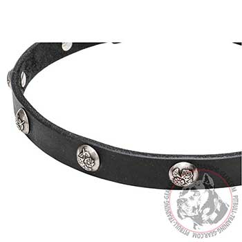 Studs with Engraved Leaves on Walking Leather Pitbull Collar