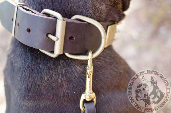 Durable D-Ring on Leather Dog Collar for Pitbull