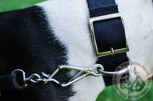 Silver-Like Fittings on Adjustable Nylon Pitbull Collar