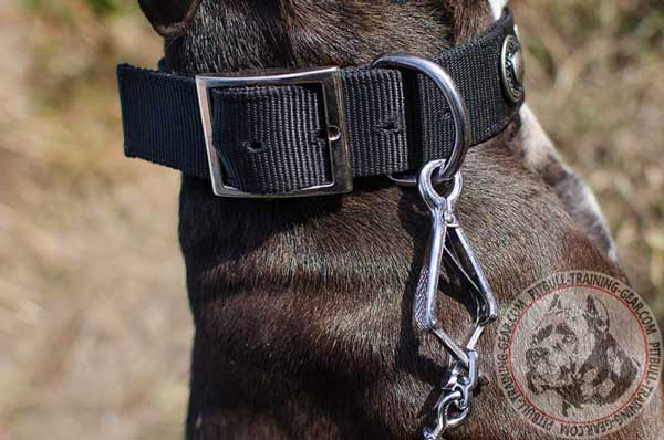 Reliable Nickel Fittings on Nylon Pitbull Collar