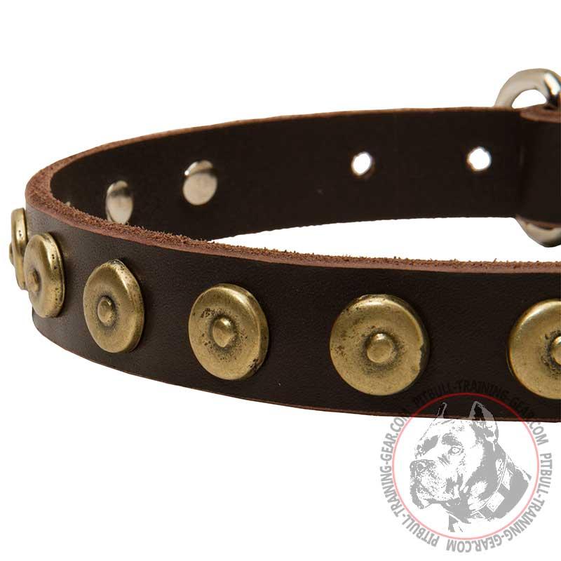 Order Designer Leather Pitbull Collar | Dog Walking Gear