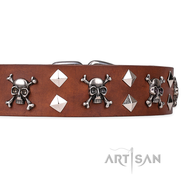 Casual style leather dog collar with remarkable studs
