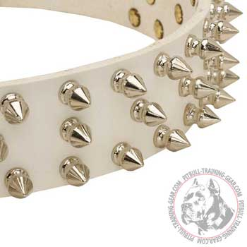 Rust Proof Nickel-Plated Spikes on White Leather Dog Collar