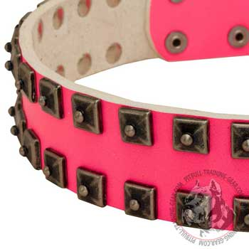 Nickel Studs on Walking Leather Pit Bull Collar Pink