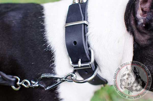 Nickel Plated Hardware of Leather Dog Collar for Leash Fixation