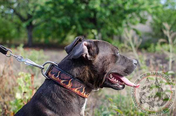 Designer Leather Pitbull Collar Easy Adjustable to your Pet's Sizes