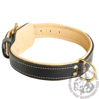 Leather Training Pit Bull Collar Soft Padded with D-ring
