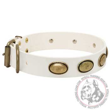 White Leather Pit Bull Collar with Brass Fittings Riveted for Durability